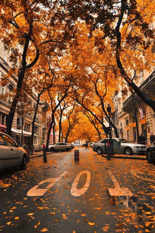 Fall Seasonal fashion ideas