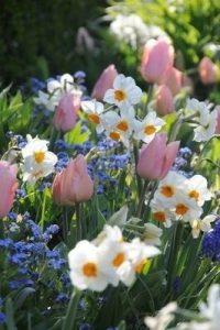spring-season-1
